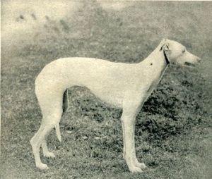 1902_img2