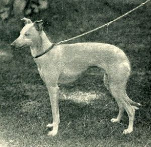 1902_img3