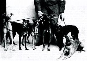Mr. Young's Whippet Racers